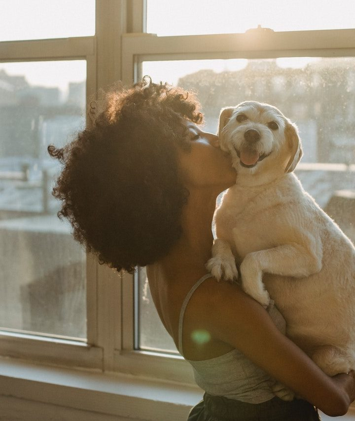 Top 10 Essential Things Should Be Remembered While Shifting The Pets