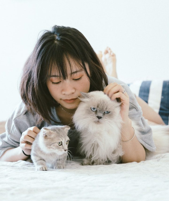 Tips And Hints For Moving With Pet